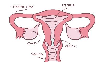Top 10 Ayurvedic Remedies To Prevent Vaginal Atrophy