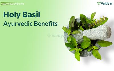 Health Benefits Of Holy Basil (Tulsi)